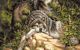 Картина по номерам но холсте 50×40 см. «Волки»