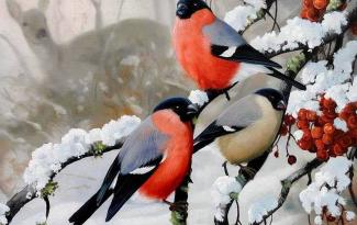 Картина по номерам на холсте 50х40 см. «Снегири в лесу»