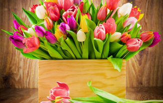 Картина по номерам на холсте 50х40 см. «Тюльпаны»