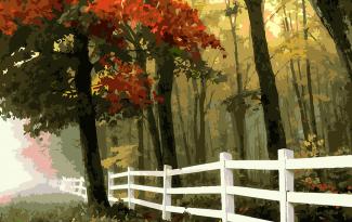 Картина по номерам на холсте 50х40 см. «Осенний лес»