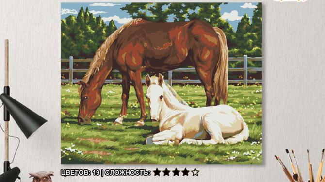 Картина по номерам на холсте 50х40 см. «Лошади» 0