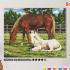 Картина по номерам на холсте 50х40 см. «Лошади» 0 Preview
